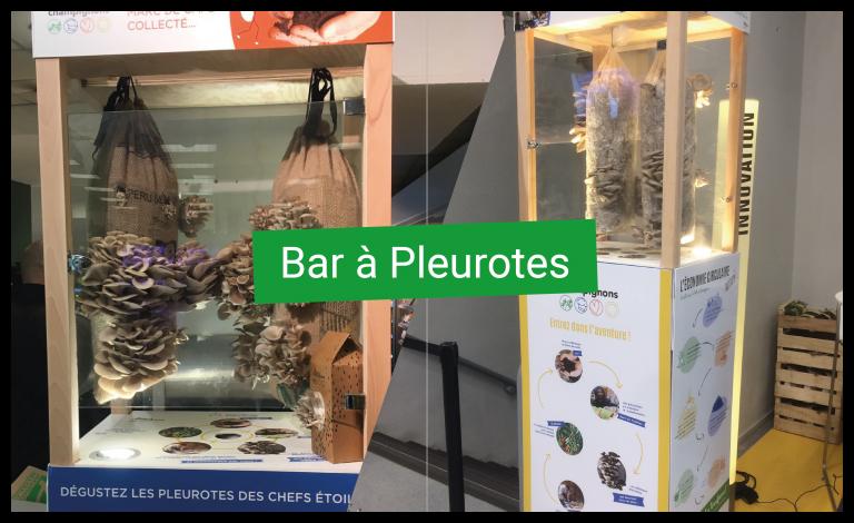 Bar à Pleurotes