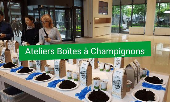 Atelier DIY Developpement durable Boite à champignons